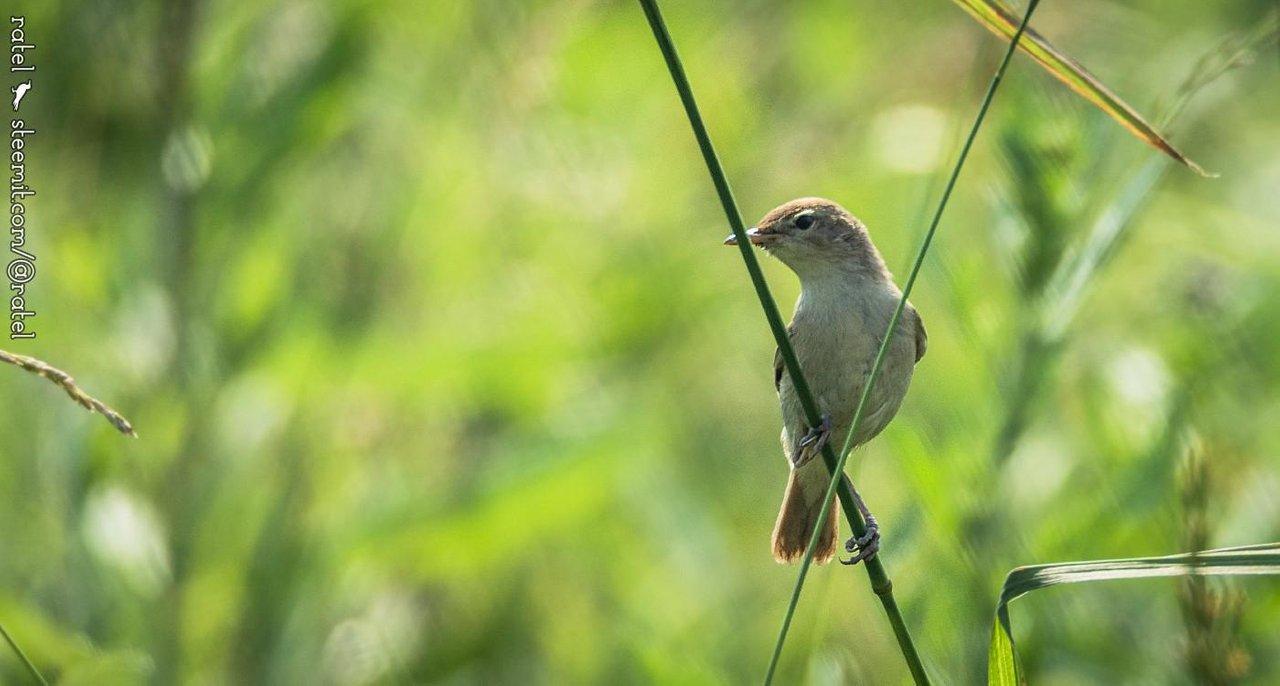 фотоохота на птиц советы методика строку таблицы ори-гиналов