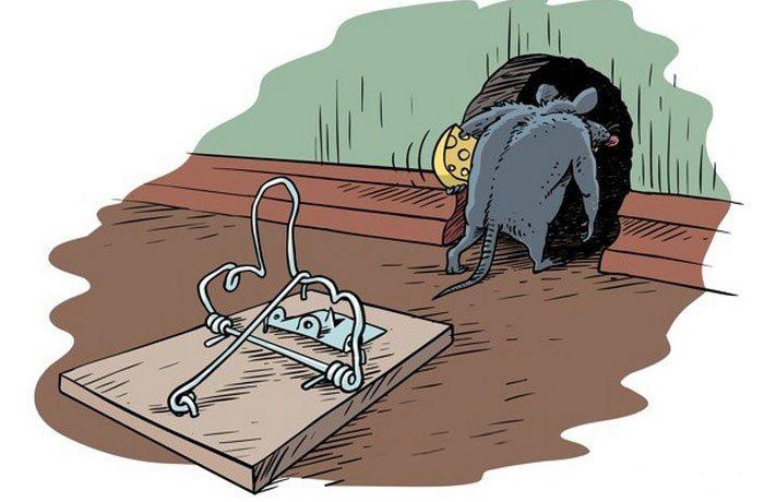 мышей.jpg