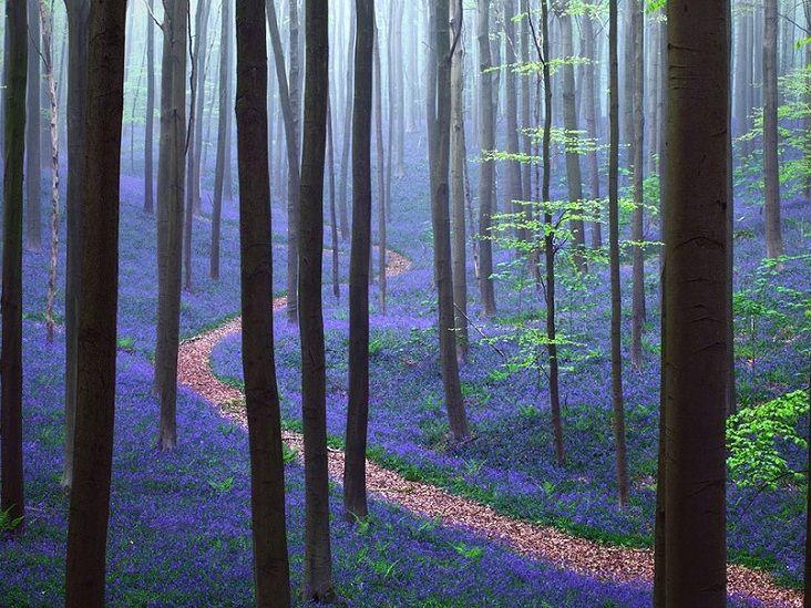 19-Сказочная дорожка в Синем лесу в Бельгии.jpg