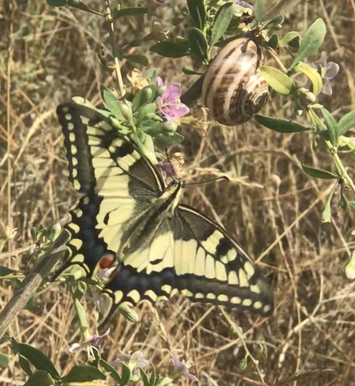 Эстафета «Поймай бабочку»