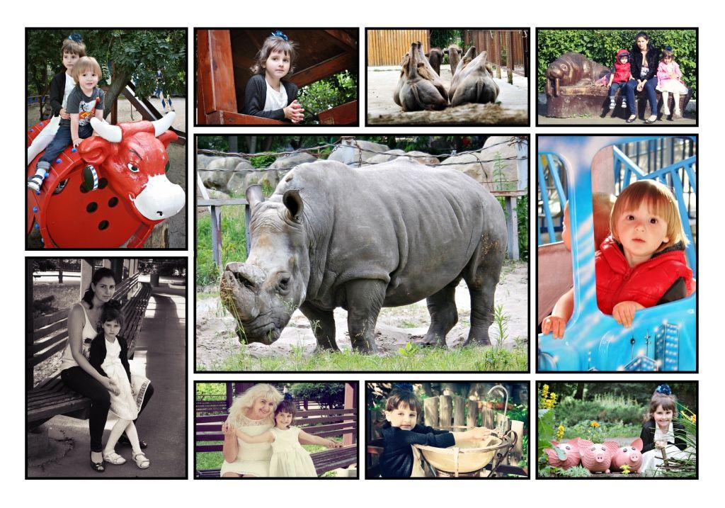 collage-19 zoo k19.jpg