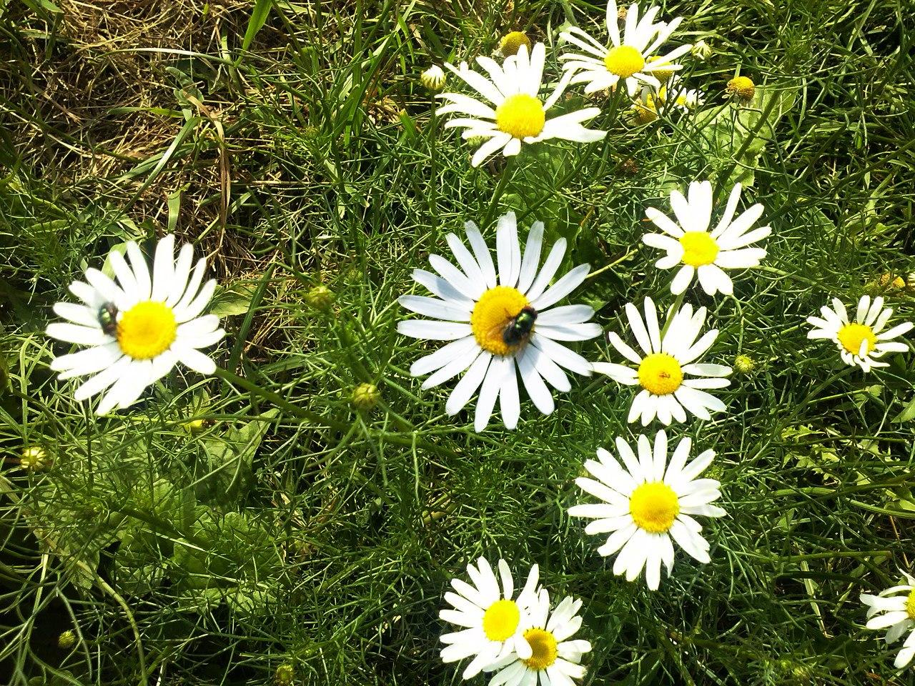 картинки с растениями брянской области бритая подмышка