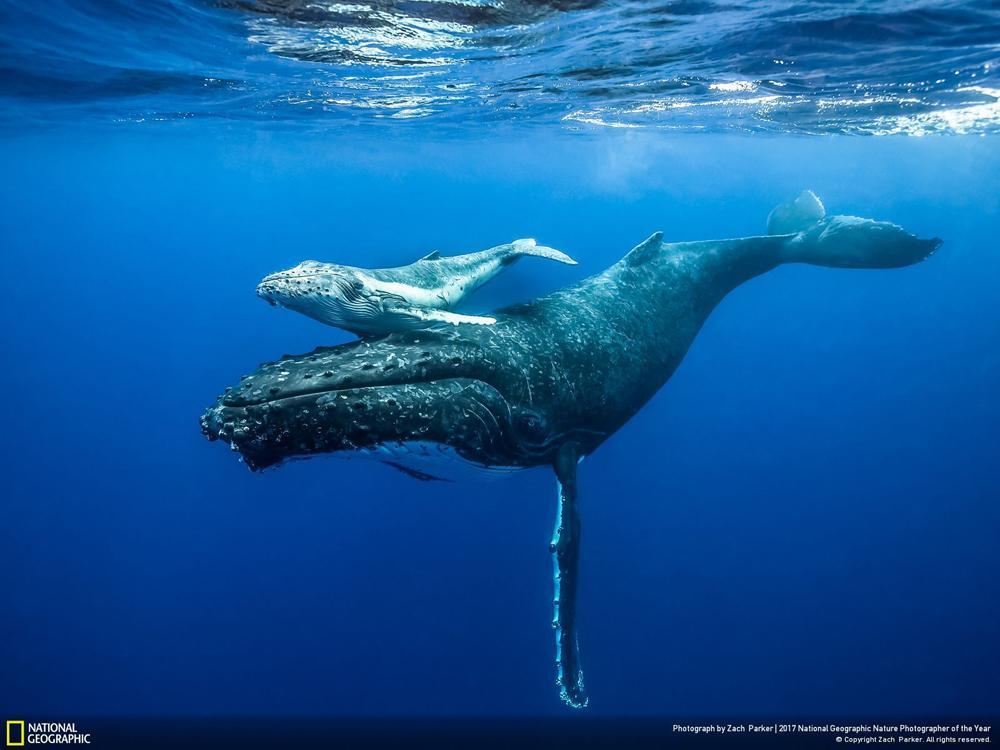 такого мужчины самое лучшее фото с китом на журнале произошло после