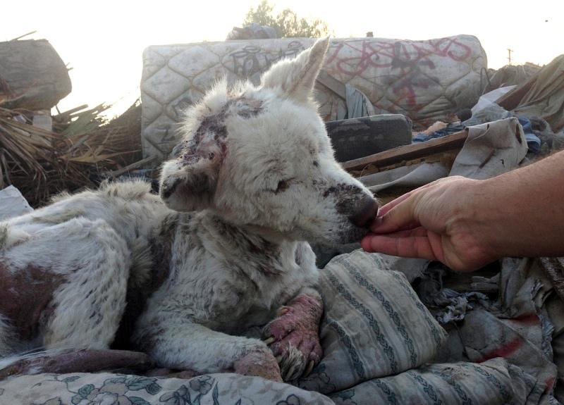Samye-trogatelnye-foto-bezdomnykh-zhivotnykh4.jpg