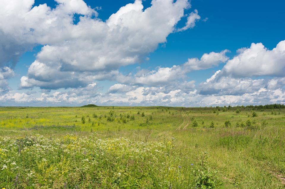 field-1285991_960_720.jpg