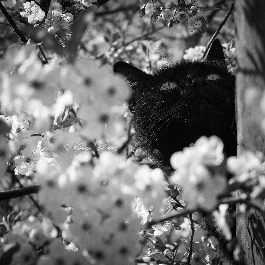 cat_dreams_by_m_lorenz-d8sywrd.jpg