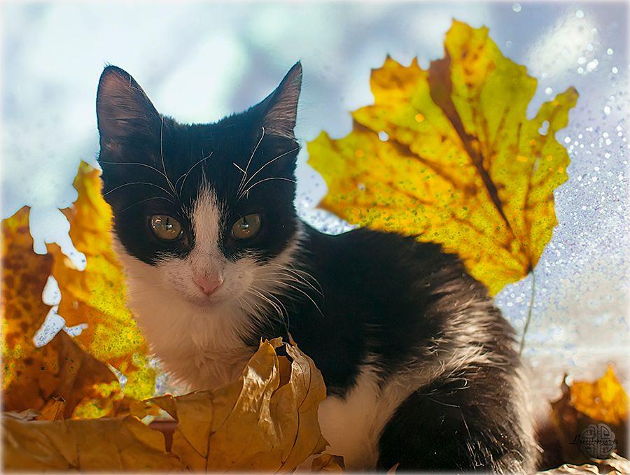 Стефани и кленовые листья.jpg