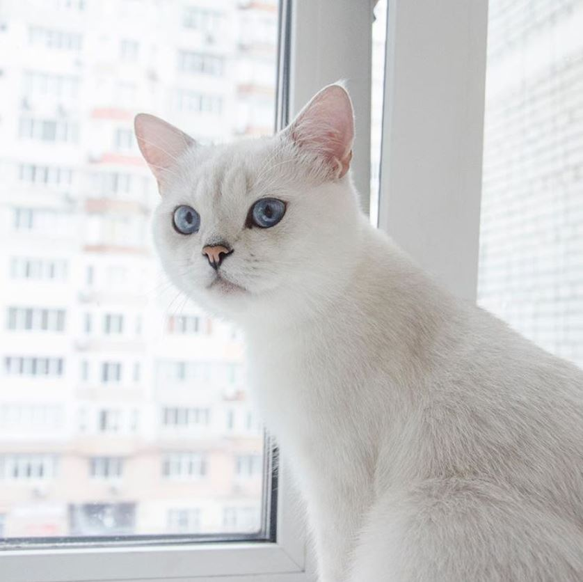 Cat_post.JPG