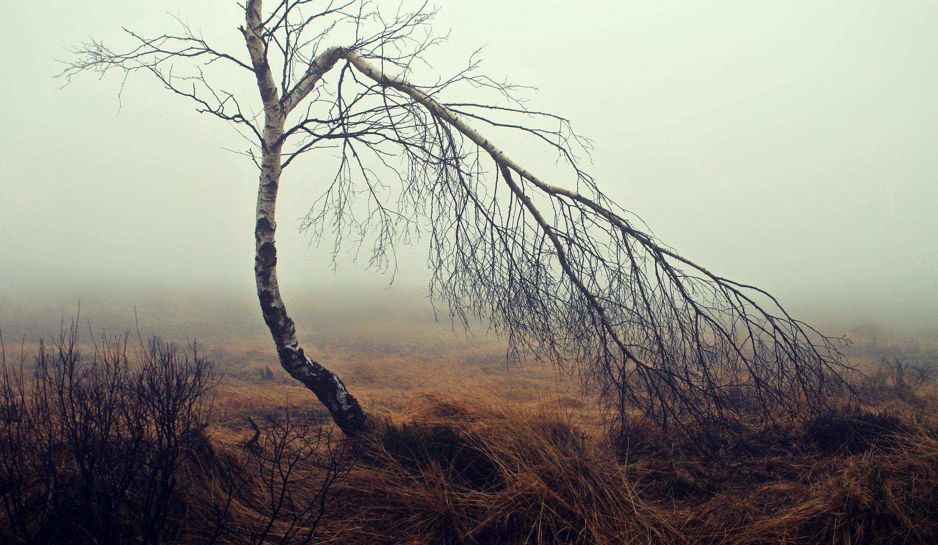 fog-1717410_1920.jpg