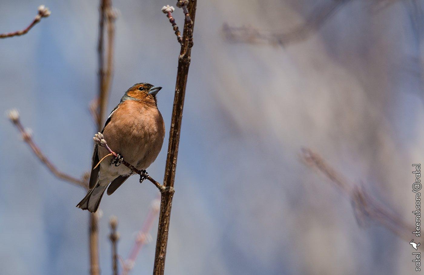 Птицы среднего урала картинки