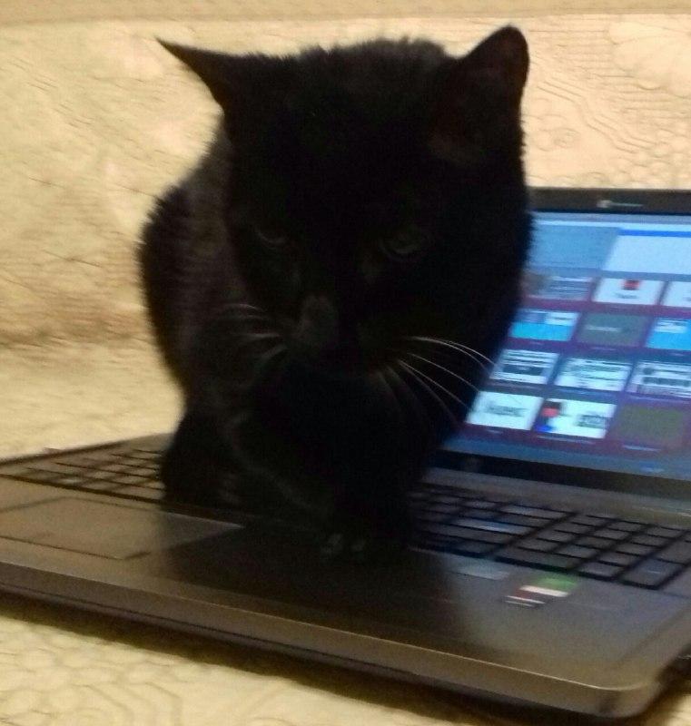 особенность кот программист гифка достаточно яркие