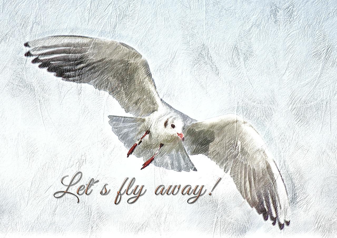 seagull-139673_1280.jpg