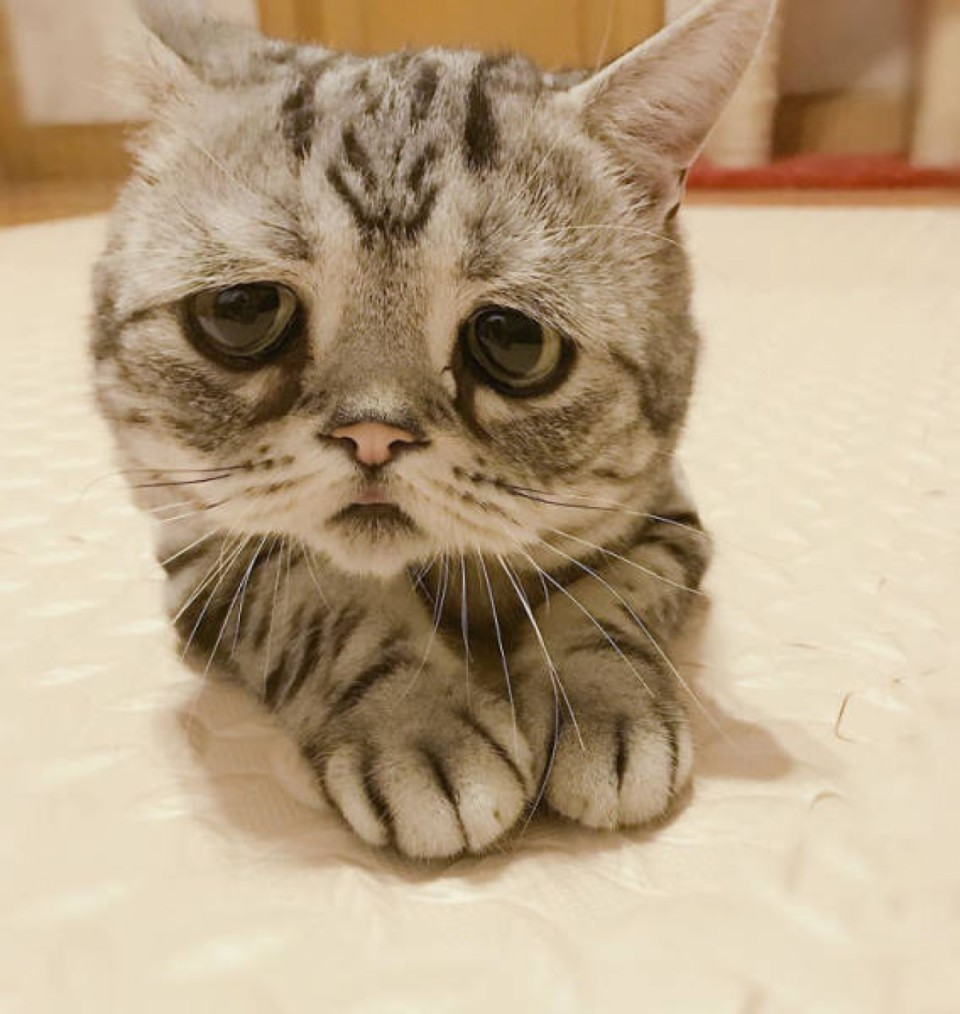 Картинки грустного кота, поздравлением для контакта