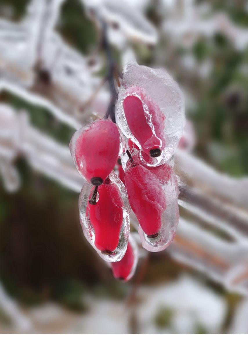 Ягода во льду.jpg