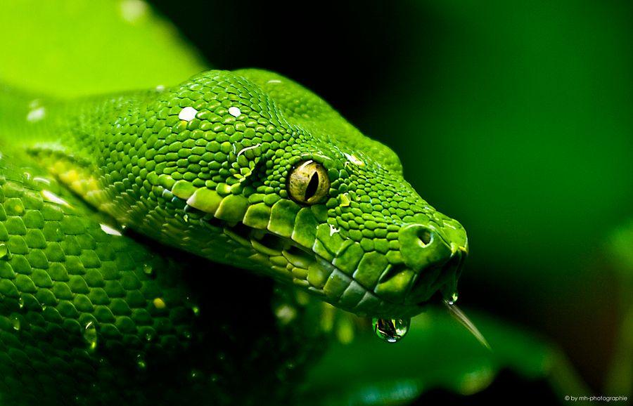 Python05.jpg