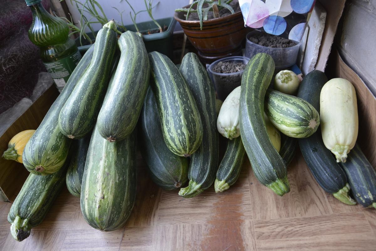 Эстафета &quot; Во саду ли, в огороде&quot;. <b>Кабачки</b>-гиганты ...