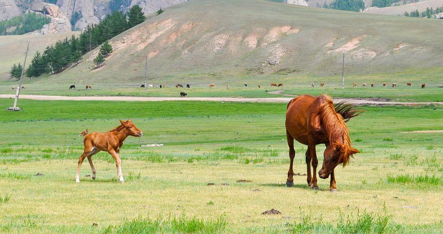 foal-2507441__480-1.jpg