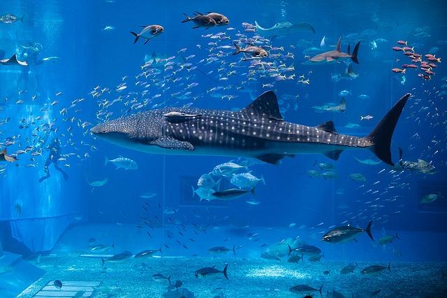 whale-1417883_640.jpg