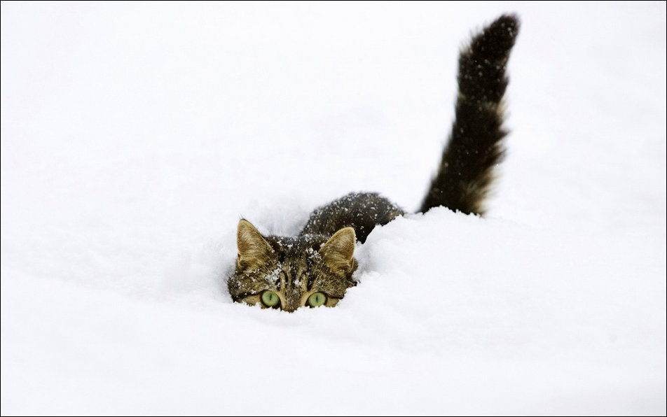cats_have_snow_02398_029.jpg