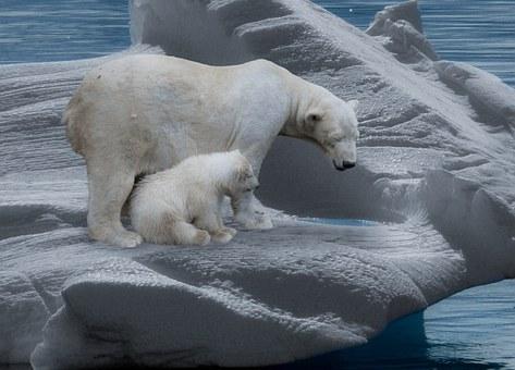 polar-bear-709682__340.jpg