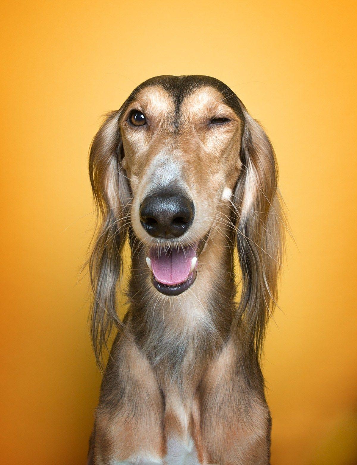 На.8, эмоции собаки в картинках
