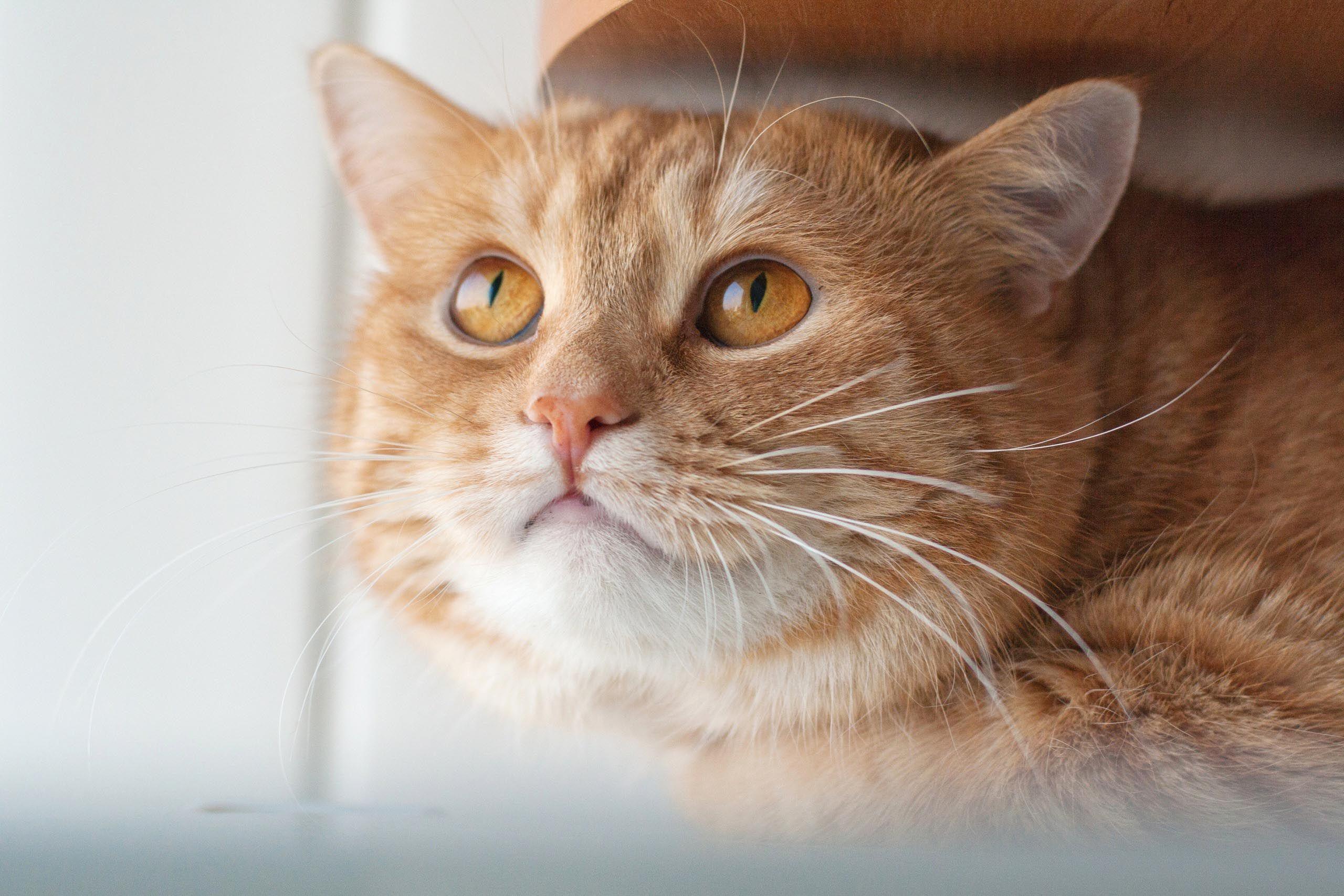 конечно тайна рыжего кота картинки хочу сказать