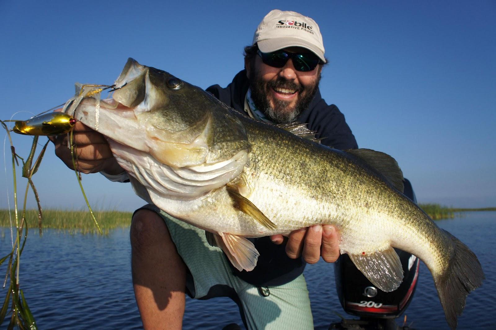 br Sebile largemouth bass.jpg