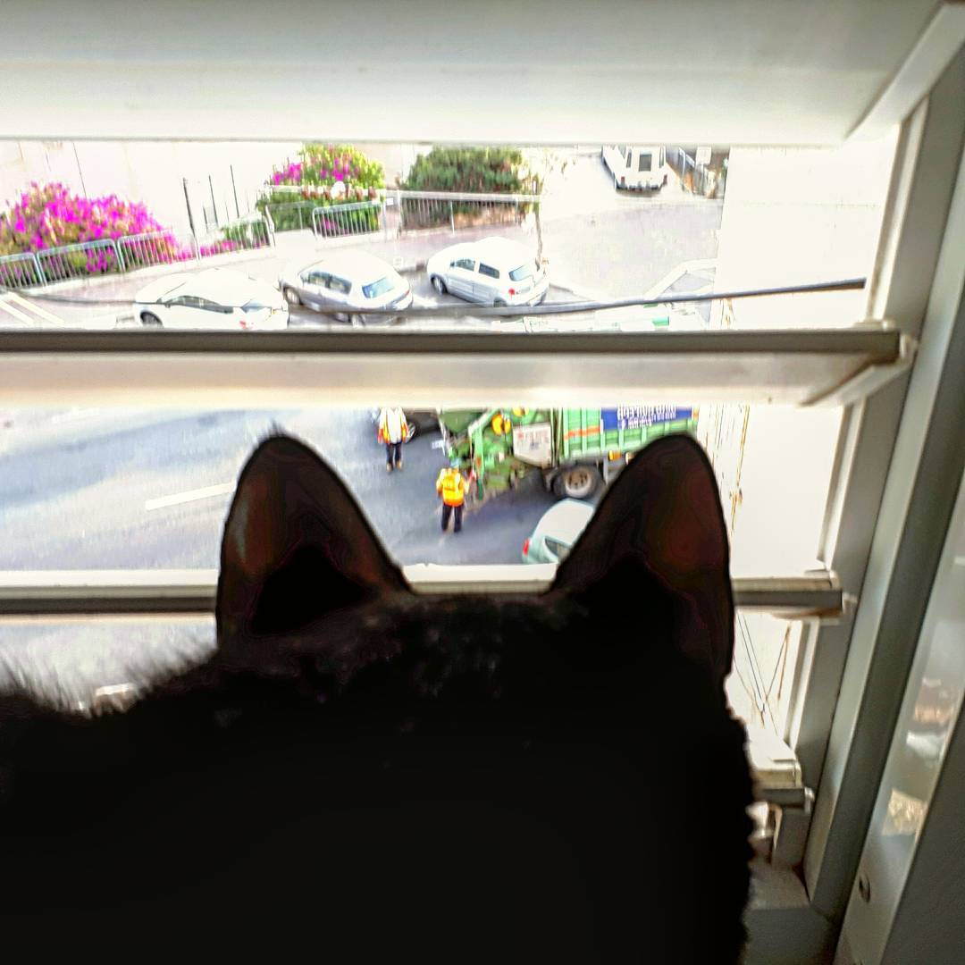 кот с ума сходит от мусоровоза