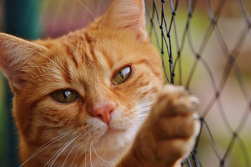 cat-1044750__340.jpg