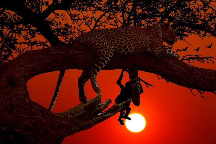 leopard-3192749__480.jpg