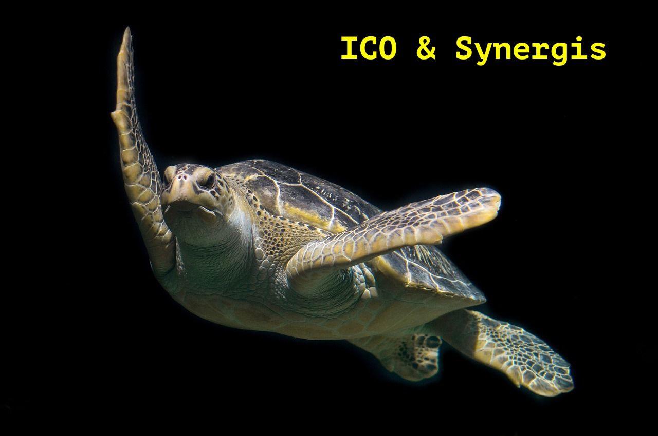 turtle-1593875_1280.jpg