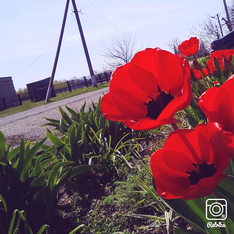 IMG_20150424_140306.jpg