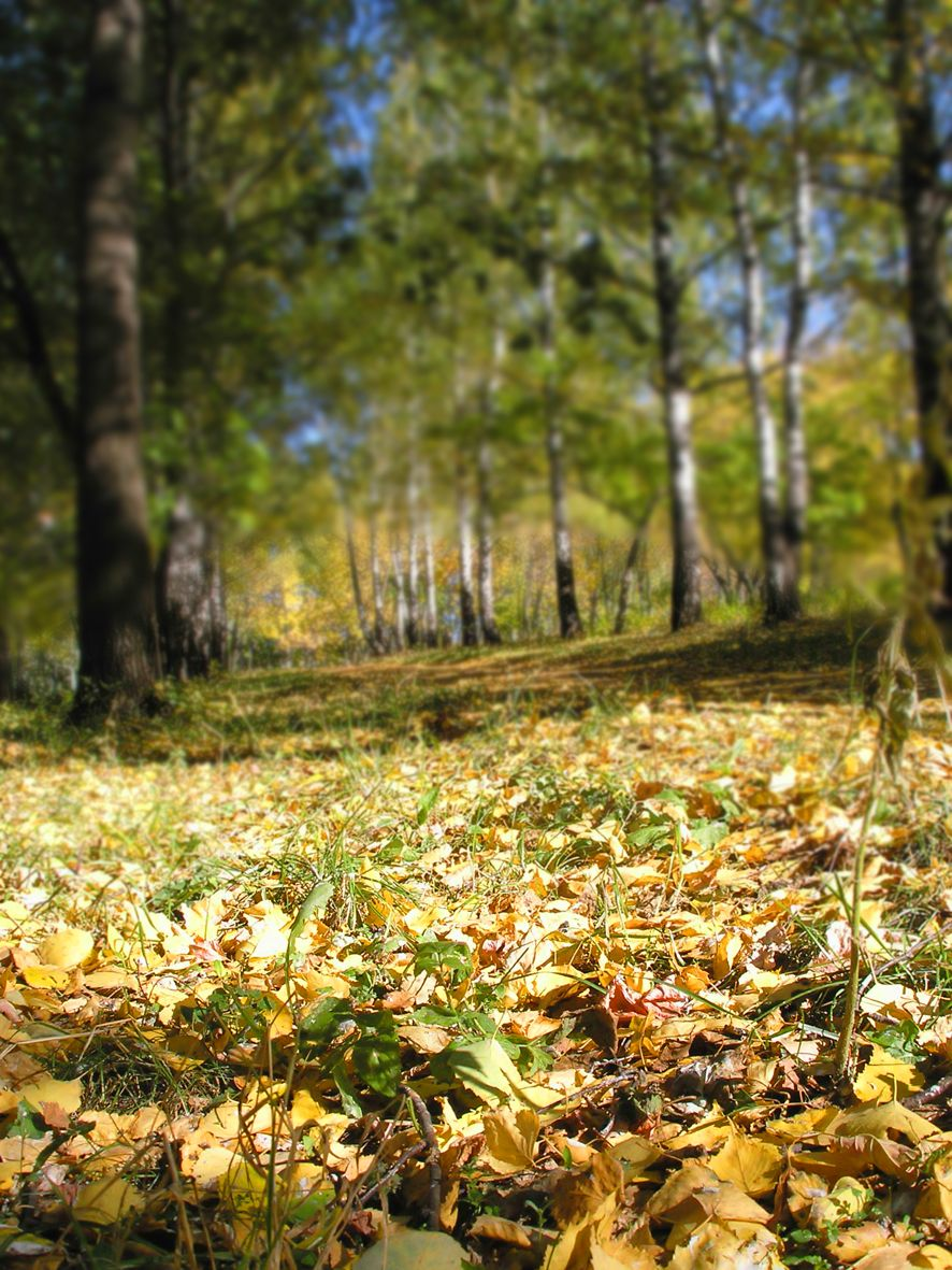 Осень в парке2.jpg