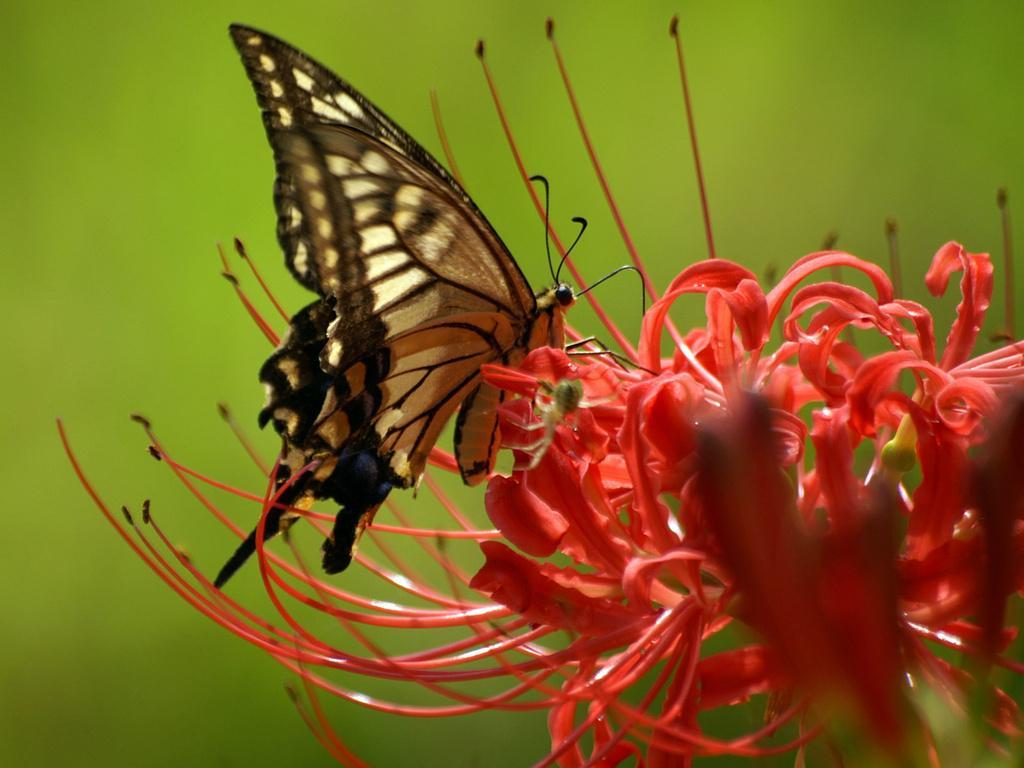 бабочка-на-цветке.jpg