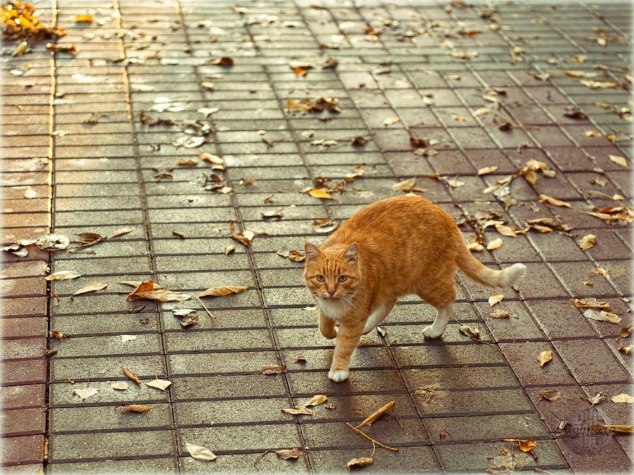 Рыжий кот и осенние листья 4.jpg
