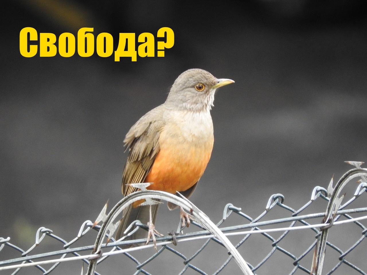 birdie-2388821_1280.jpg