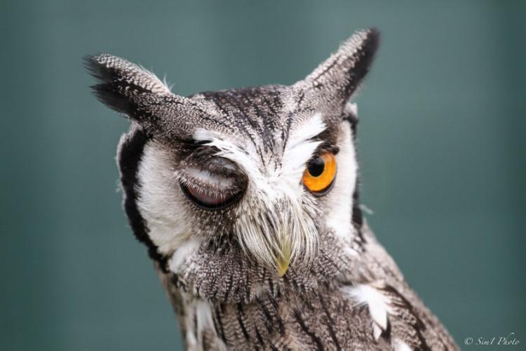 1489315833_owl.jpg