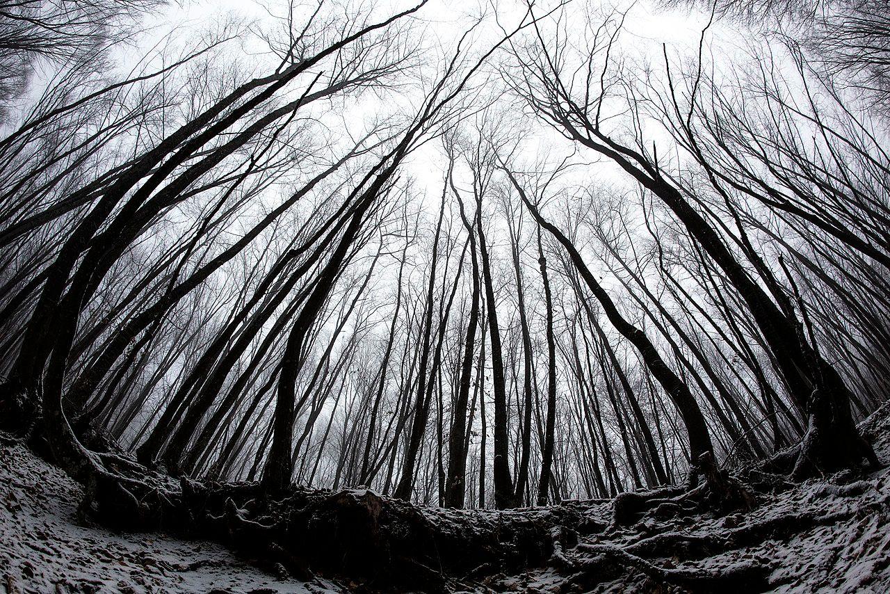 Картинки по запросу чб лес