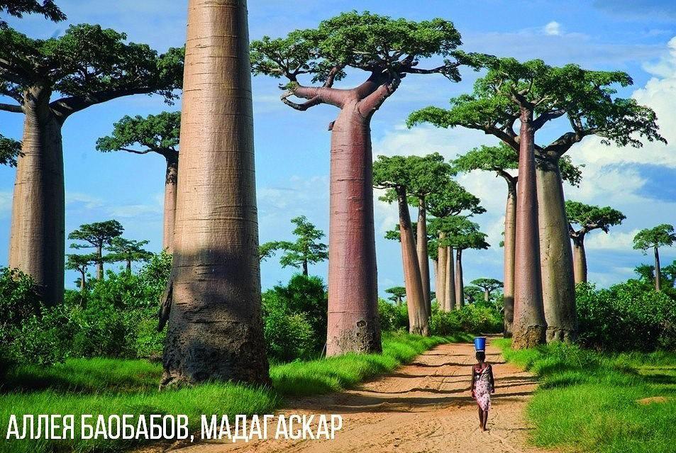 Аллея баобабов Мадагаскар.jpg