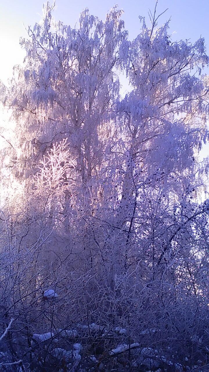 photo_2017-11-30_12-16-45.jpg