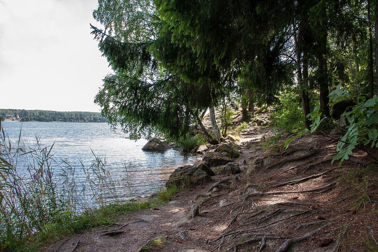 IMG_5062-лес-1280px.jpg