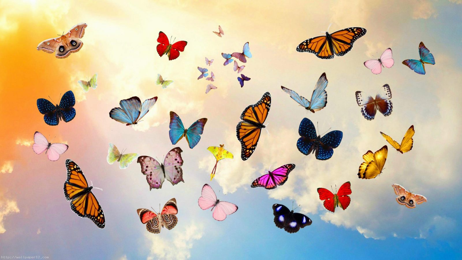 9-different-colors-butterfly-wallpaper-1920x1080-1600x900.jpg