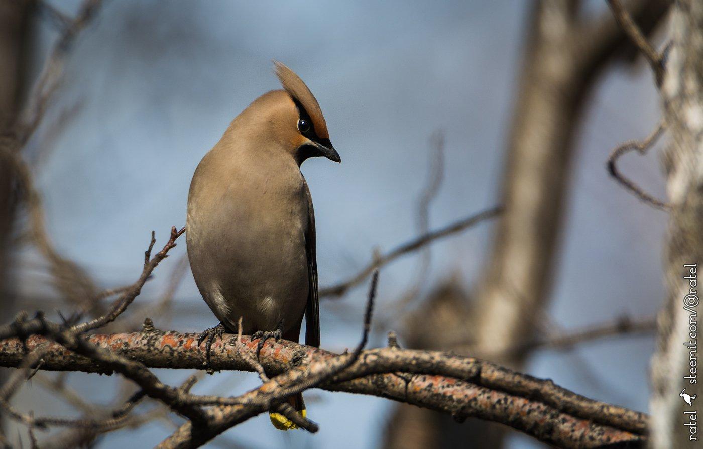 основе картинки птиц нашего леса мгновения