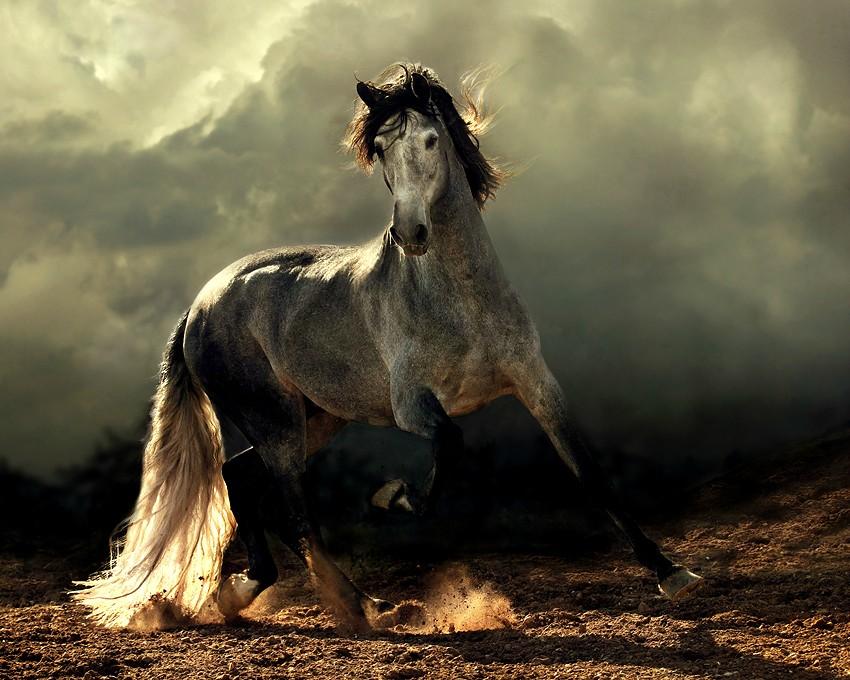arabian-horses.jpg