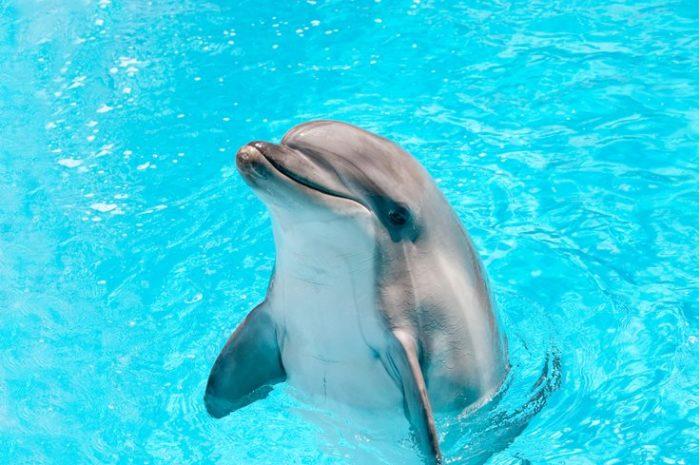 delfin-e1519921979189.jpg