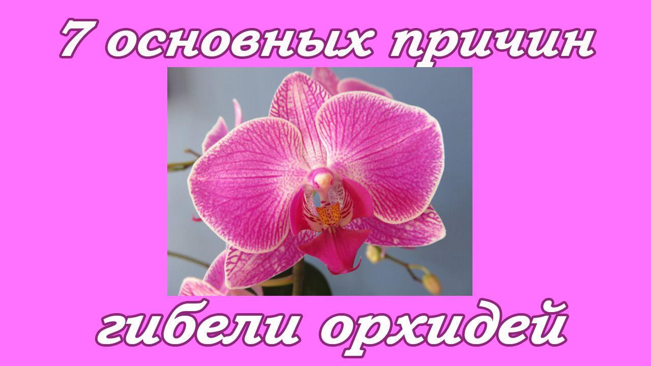 7 основных причин гибели орхидей.jpg