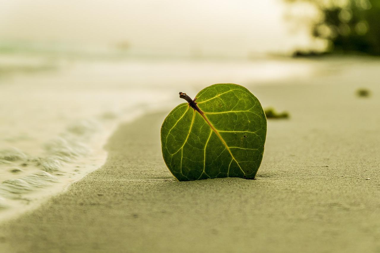 beach-394503_1280.jpg