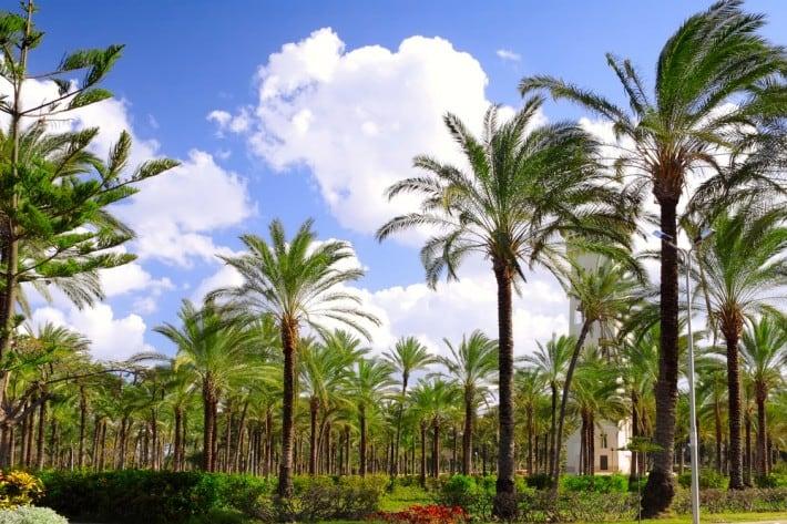 Montaza-Royal-Gardens-in-Alexandria-Egypt.jpg
