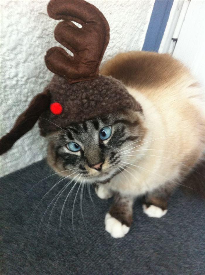 06-cross-eyed-cats1.jpg