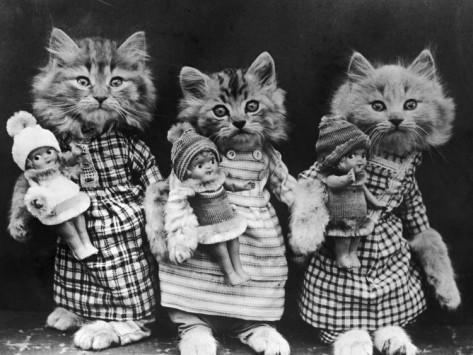 кошки1.jpg